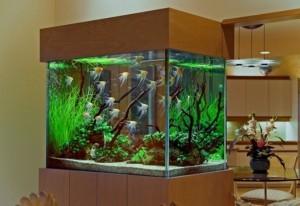 aquarium movers, Aquarium Movers